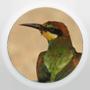 BirdBlog.org   -   Natuurblogs uit binnen- en buitenland